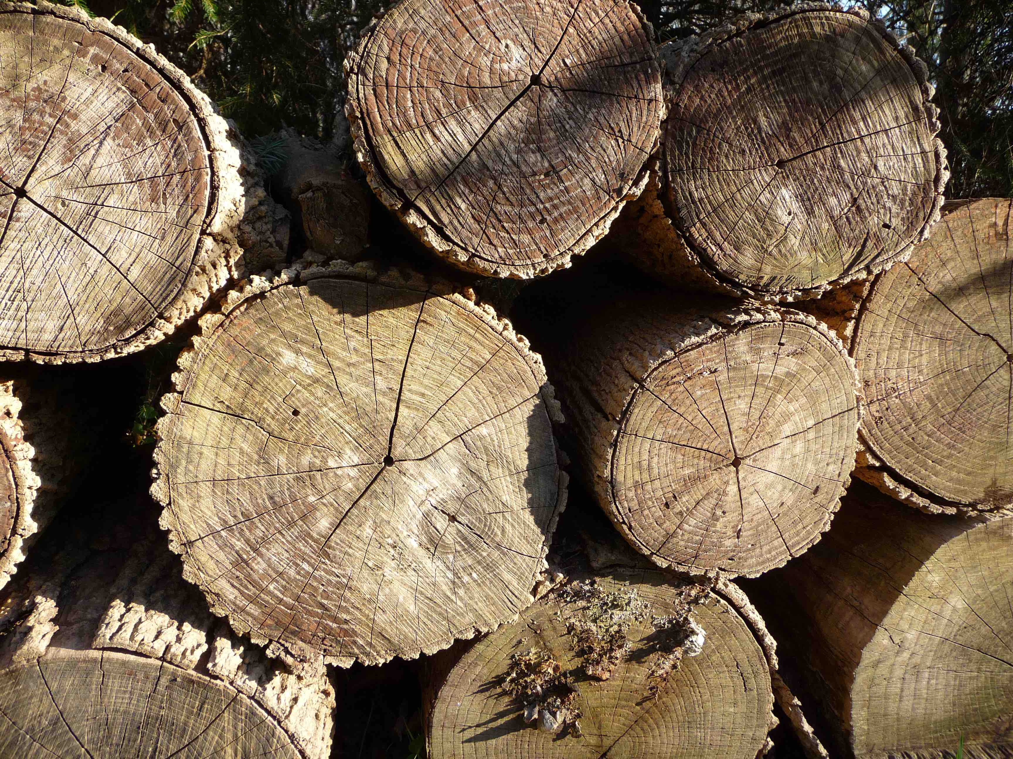 wood pile_P1000082